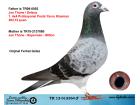 TR12-012364 ERKEK BABASI YAVRU KLASMAN ŞAMPİYONU ANNESİ JOS THONE -SÜPERMAN-MİLTON