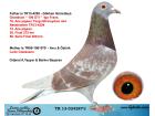 TR13-024287 DİŞİ / IGO FRANS - LUDO CLAESSENS