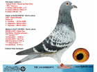 TR14-040607 DİŞİ / 2 ORİJİNAL GERRİT LAHUİS KIZI SUPER HEN INRED SHOWPIECE X FIRST LADY