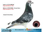 TR15-002194 DİŞİ / KIPP UND SOHNE MARATON % 100