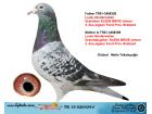 TR15-020434 ERKEK / KAN YAKINLAŞMASI LOUİS VADERWİELEN