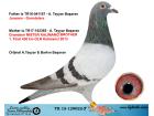 TR15-129022 ERKEK / JANSSEN GRONDELARS