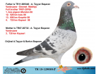 TR15-129085 ERKEK / VANBRUANE - DESMET ANNESİ 3. 720 KM KAYSERİ