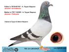 TR15-129104 ERKEK / TARDİV 2019 JANSSEN - CATTRYSEE