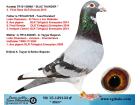 TR15-129133 ERKEK / KARDEŞİ 3. FİNAL OLR DRACULA