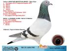 TR15-129179 DİŞİ / BABASI MISTER KALİMANCİ KARDEŞİ 1. FİNAL 430 KALİMANCİ
