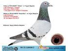 TR15-129998 DİŞİ / LUDO CLAESSENS - JANSSEN