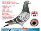 TR15-130659 GERRİT STYL / ERKEK - GERRİT LAHUİS % 100 NEDELYA OĞLU