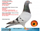 TR15-130814 DİŞİ / KARDEŞİ 4. FİNAL 320 KM ERİK LİMBOURG - DE RAUW ŞABLON
