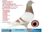 TR15-154084 ERKEK / YAVRULARI YARISMIS - BABASI KRAL - ANNESİ 206 !!!