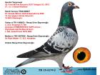 TR15-3174 DİŞİ / ORJ. RECEP EMİN BAYRAMOĞLU / KENDİSİ 32 FİNAL 463 KM - KOOPMAN - R. WALTER