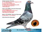 TR15-3602 ERKEK / ORJÇ RECEP EMİN BAYRAMOĞLU - KOOPMAN - DE RİCK WALTER
