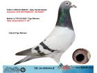 TR16-009394 ERKEK / GABY VANDENABEELE % 100