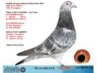 TR16-020519 ERKEK / KENDİSİ ALGARVE GOLDEN RACE YARIŞMIŞ JOS THONE
