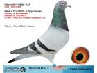 TR16-041183 DİŞİ / GABY - ALFON KLAAS - JANSSEN - KALLİMEYER