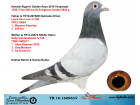 TR16-160963 DİŞİ / VAN LOON - GABY - 99. FİNAL 505 KM ALGARVE GOLDEN RACE