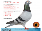 TR17-000066 ERKEK / KENDİSİ 7. FİNALOLR MANİSA45 2017