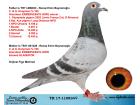 TR17-110834 DİŞİ / G.& C. KOOPMAN % 100