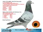 TR17-110868 ERKEK BABASI KOOPMAN % 100 ANNESİ GABY VANDENABEELE % 100