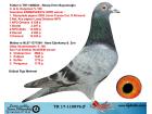 TR17-110876 ERKEK BABASI KOOPMAN % 100 ANNESİ GABY VANDENABEELE % 100