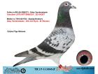 TR17-111065 ERKEK / BABASI GABY VANDENABEELE ANNESİİ VAN DYCK - M WOUTERS