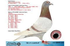 TR17-112576 ERKEK / KENDİ YARVUSU 55. 300 KM ALGARVE GOLDEN RACE BABASI KRAL