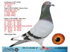 TR17-144306 ERKEK / KARDEŞİ 6. 430 KM - JANSSEN - VANLOON - GERRİT LAHUİS