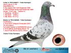TR17-146735 DİŞİ / BABA GERRİT LAHUİS % 100 ANNE SHOWMAN X NEDELYA