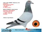 TR17-147115 DİŞİ / MARATON EMIEL DENYS - DESMET MATTHIJS
