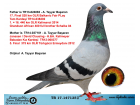 TR17-147135 DİŞİ / ORJ A. TAYYAR BAŞARAN BABASI SUNGER BOB 17. FİNAL 520 KM
