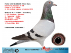 TR17-188646 DİŞİ / BABASI HEREMANS CEUSTERS ANNESİ KOOPMAN HARVOORT
