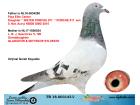 TR18-003443 DİŞİ /BABA PORCHE 911 KIZ KARDEŞİNİN YAVRUSU ANNE GEERINCKX