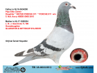 TR18-003155 DİŞİ /BABA PORCHE 911 KIZ KARDEŞİNİN YAVRUSU ANNE GEERINCKX