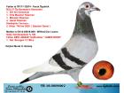 TR18-050906 DİŞİ / BABASININ KARDEŞİ BULUT ORTA & MARATON KLASMAN ŞAMPİYONU