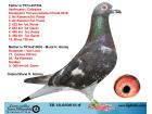 TR18-050916 ERKEK / BABASI VANBRUANE - CATTRYSSE ANNESİ 11. ÇERKEZ 338 KM