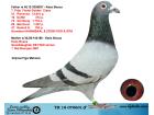 TR18-070601 ERKEK / 2 ORJ. KEES BOSUA % 100 YAVRUSU