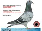 TR18-070661 ERKEK / BABA ORJ. GABY VANDEABEELE ANNE KOOPMAN % 100