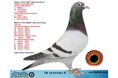 TR18-073361 ERKEK / BABASI DUMAN ( 206 KIZ KARDEŞİ )