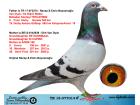 TR18-077014 ERKEK / ORJ RECEP EMİN BAYRAMOĞLU - VAN DYCK - DE RİJCK WALTER