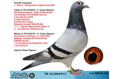 TR18-206474 DİŞİ / İZMİT-1  ŞAMPİYONU  - A. TAYYAR BASARAN % 100