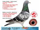 TR18-206608 LEEN 608 / ERKEK - BABADAN KARDEŞİ 18. FİNAL GOLDEN ALGARVE