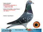 TR18-206722 ERKEK / MARATON DESTMET MATTHIJS - EMIEL DENYS