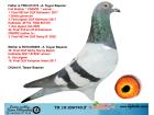 TR18-206740 ERKEK / BABASI CİNGÖZ KARDEŞİ - ANNESİ 30 FİNAL OLR SUNNY BEACH