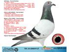 TR18-206847 ERKEK / BABASI SUPERSTAR 1 SEMI FINAL 2 FINAL ANNESI 16. FINAL OLR SOFIA