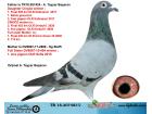 TR18-206483 DİŞİ BABASI CİNGÖZ OĞLU ANNESİ SOFİA AS 1 KIZ KARDEŞİ
