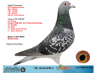 TR18--210758 DİŞİ / KENDİSİ YARIŞMIŞTIR . JOS THONE / M BUİJK