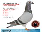 TR19-001645 DİŞİ / BABASININ KARDEŞİ MISTIR KALİMANCİ 1. 430 KM KALİMANCİ 2014