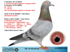 TR19-001667 ERKEK / KARDEŞİ OLR BEST OF İSTANBUL 216 KM 3.