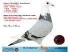 TR19-002501 ERKEK / BABASI JAN HOOYMANS ANNESİ GABY VANDENABBELE