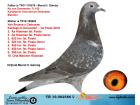 TR19-002586 DİŞİ / MARATON KO VAN DOMMELEN X VAN BRUANE CATTRYSSE